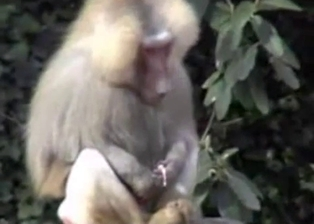 Small monkey jerks a dick under tree